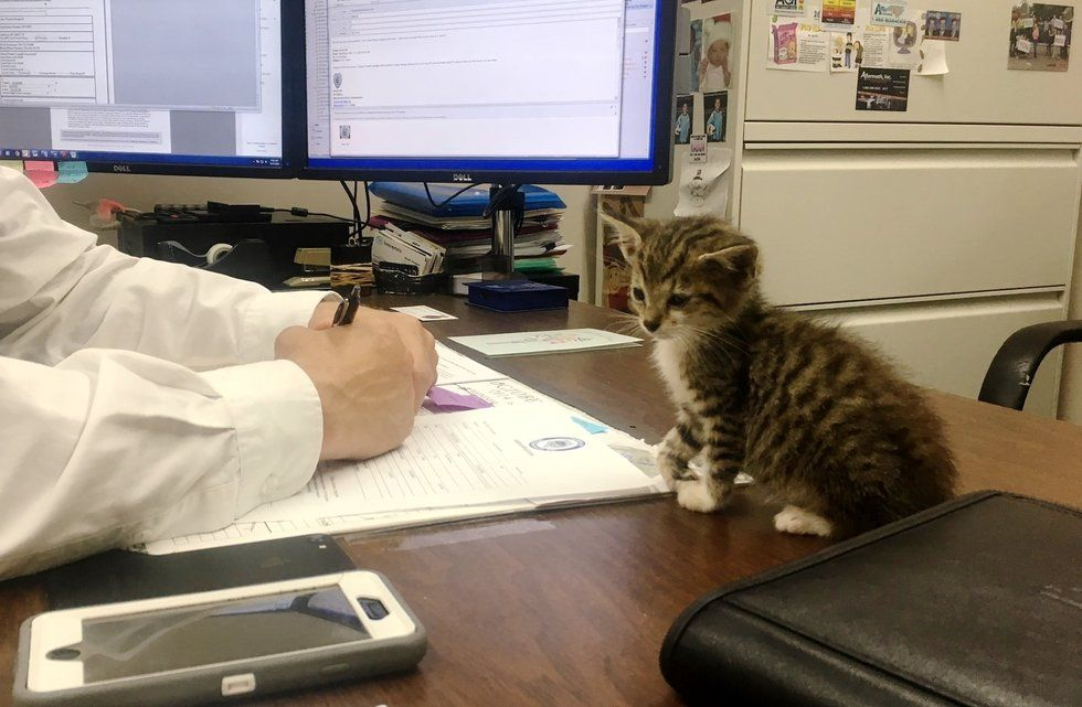 Rescued Kitten Insists on Staying With Police Chief Who Helped Her When Others Couldn't
