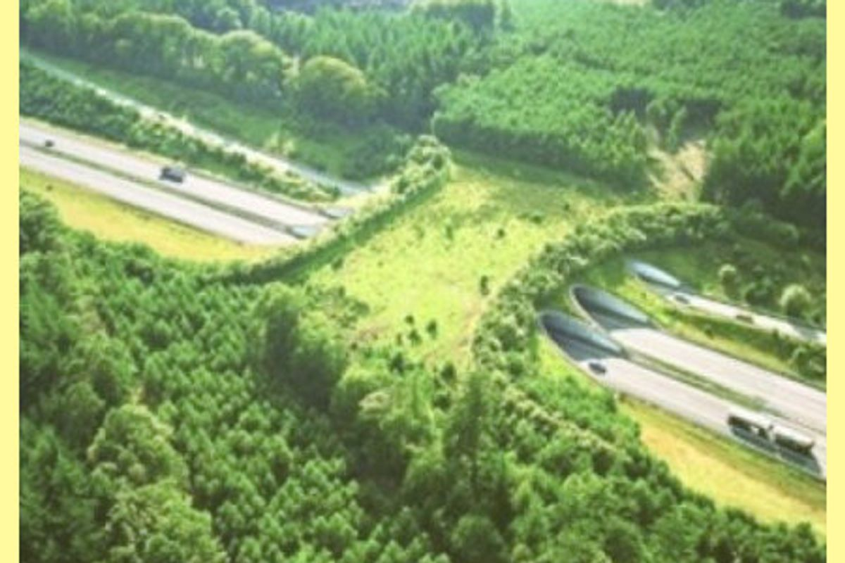 12 Most Awesome Wildlife Crossings in the World