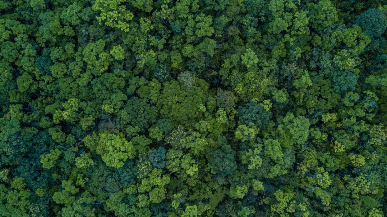 We could cut atmospheric carbon by 25% by planting a forest the size of the United States