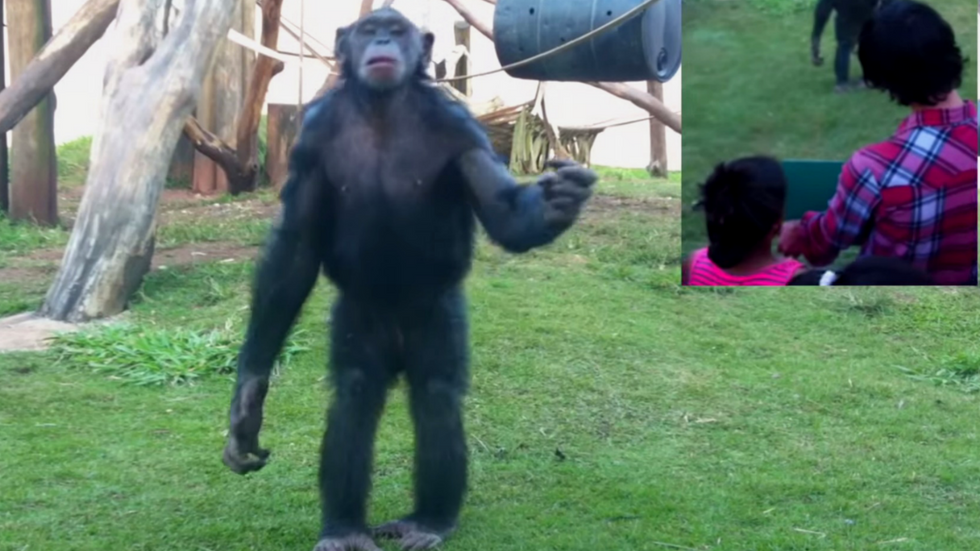 One Clever Trick To Get All The Chimps' Attention The Next Time You're At The Zoo