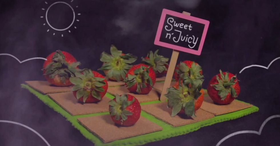 A Brief Look at the Terrifying History of the Modern Strawberry