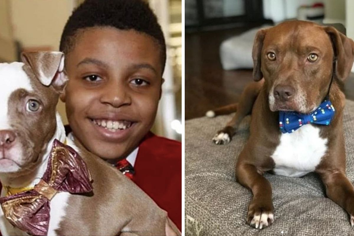 12-year-old makes and donates bow ties to help shelter animals find their forever homes