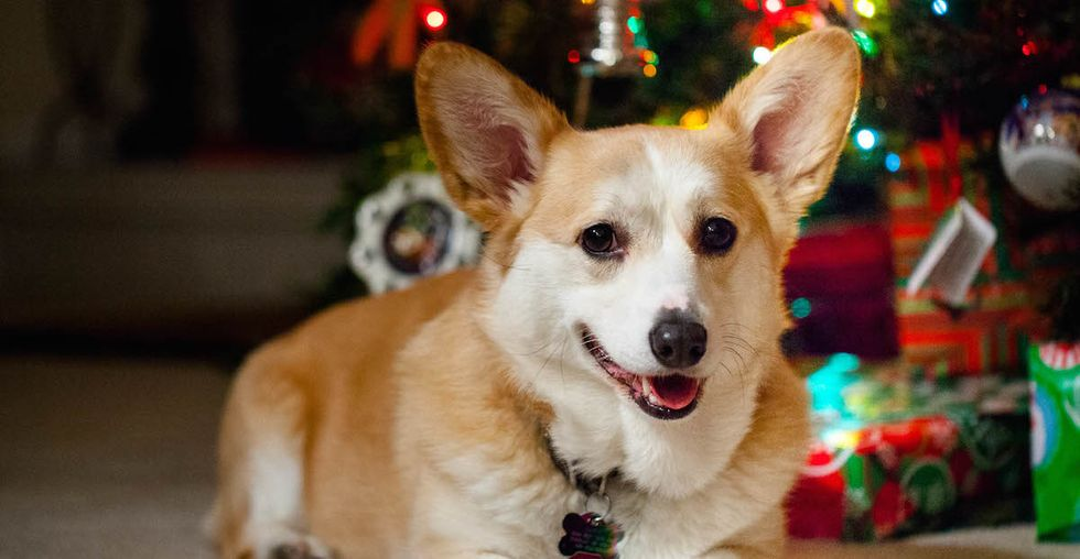 Rent a Dog to Stave Off Holiday Loneliness