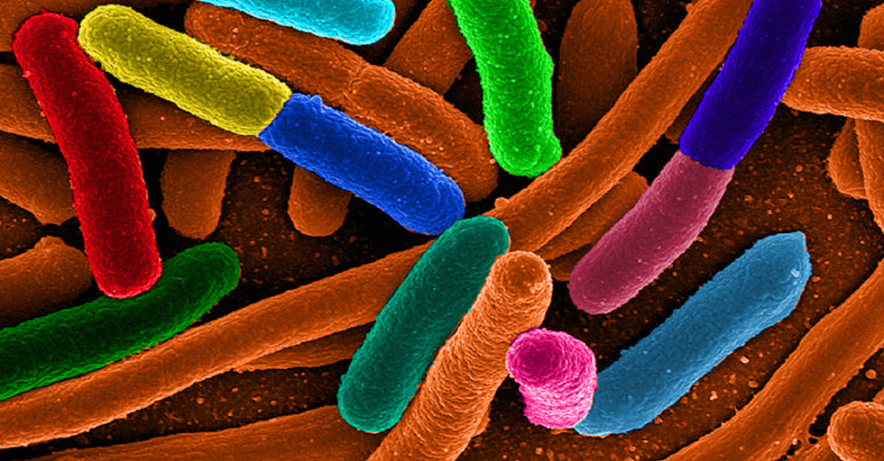 You Can Turn E.Coli Bacteria into Microscopic Fuel Factories