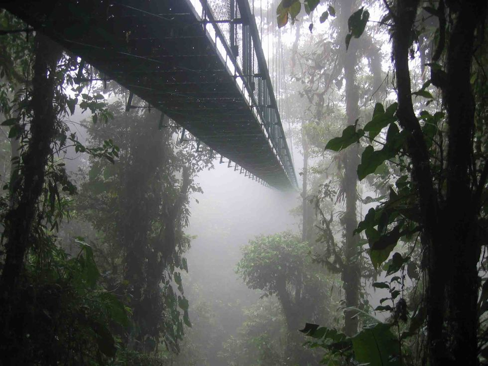 The Disappearing Clouds in a Costa Rican Cloud Forest