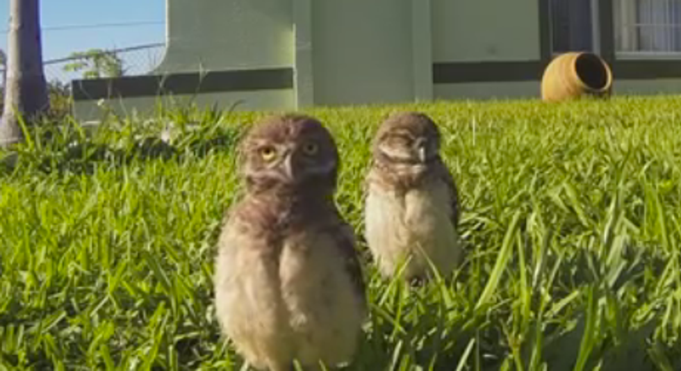 Owls Dancing For A GoPro Will Make Your Monday 100% Better