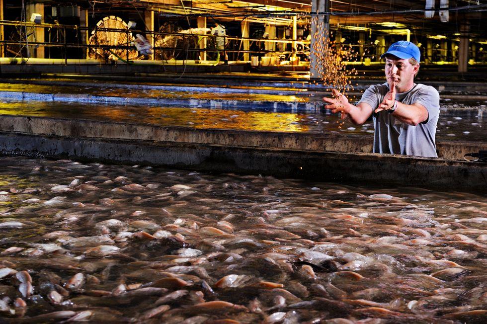 Making Fish Farming Appetizing