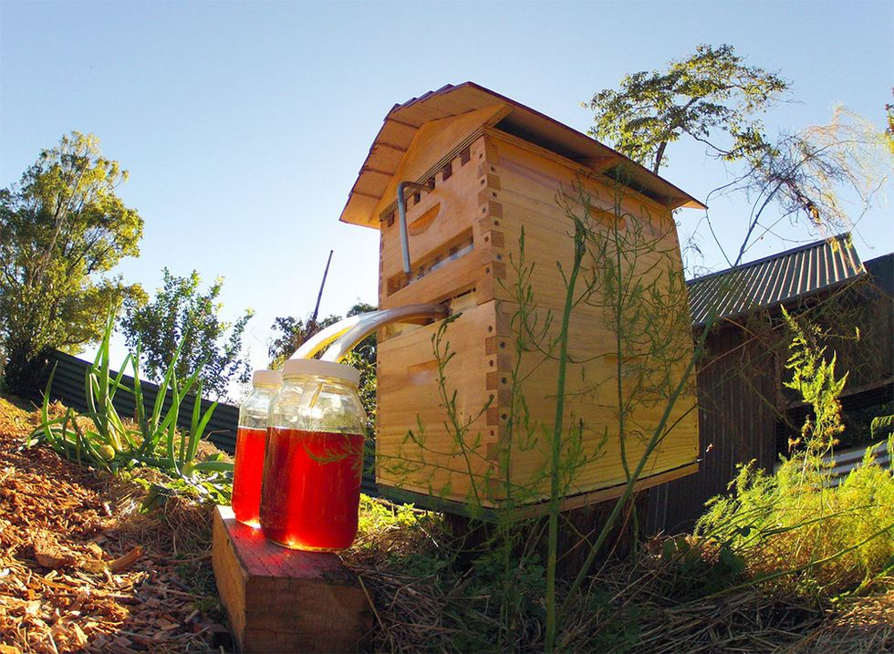 New Non-Invasive Honey Harvesting Device To Keep Bees Happy