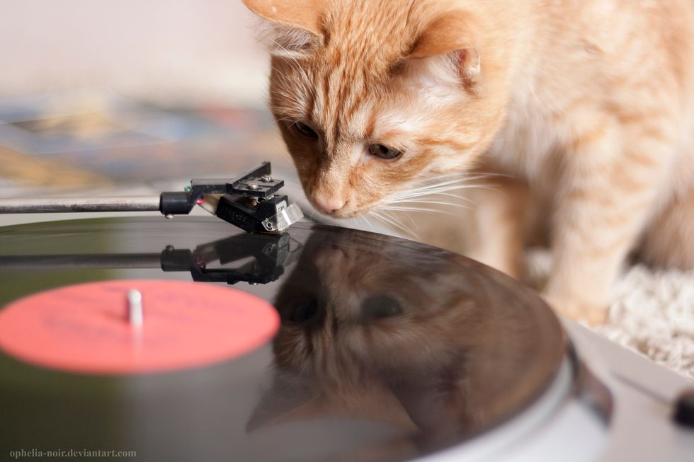 Cats Have Science to Thank for a New Type of Music Written Specifically for Them
