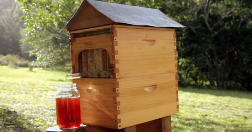 Father and Son Create Revolutionary New Beehive to Give You Honey On Tap