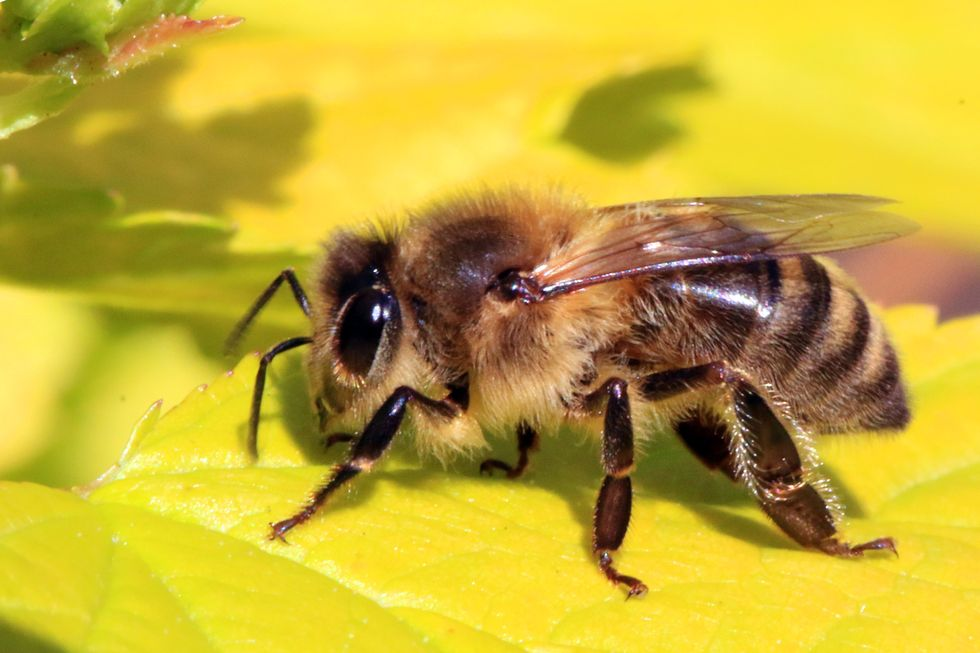 Study Points to Multiple Causes of Bee Population Collapse