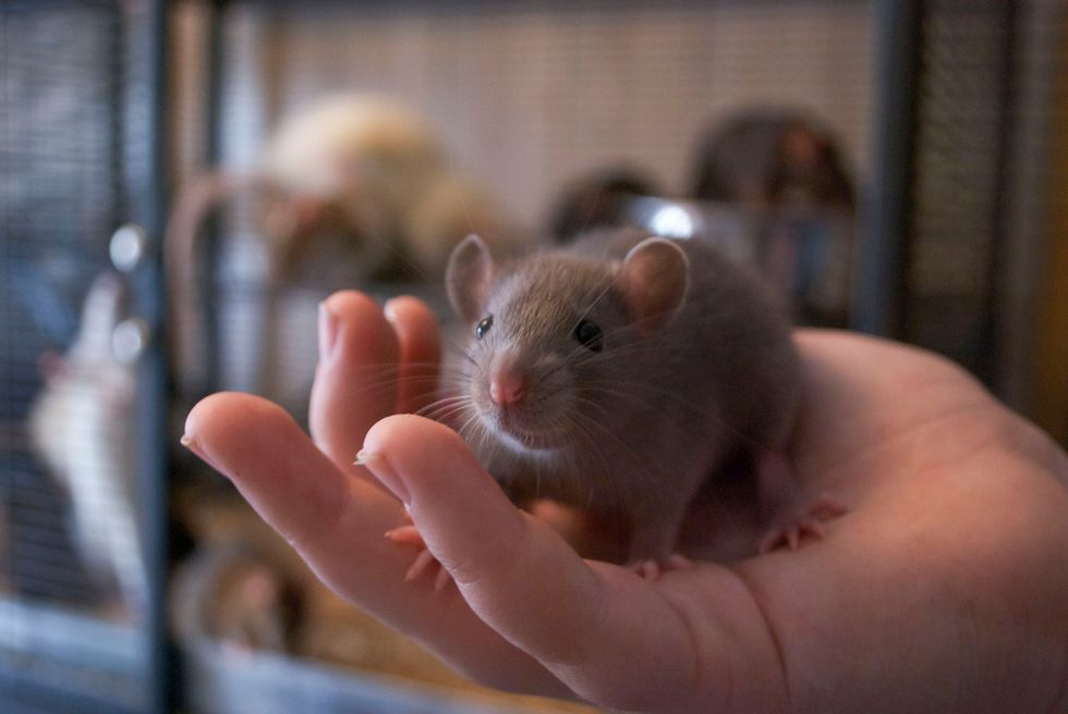 Scientists Can Give Sleeping Mice False Happy Memories