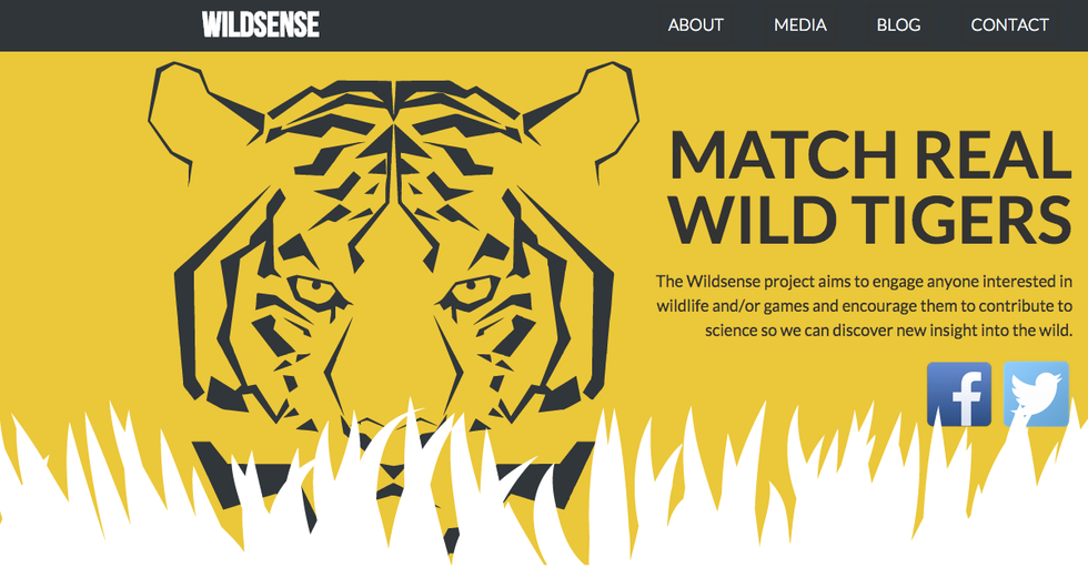 You Can Help Track Tigers Around the World With This App