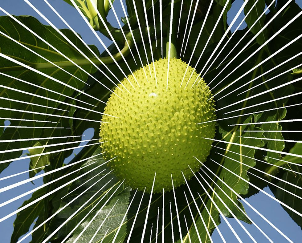 The Economic Case for Loving This Spiky, Tropical Fruit