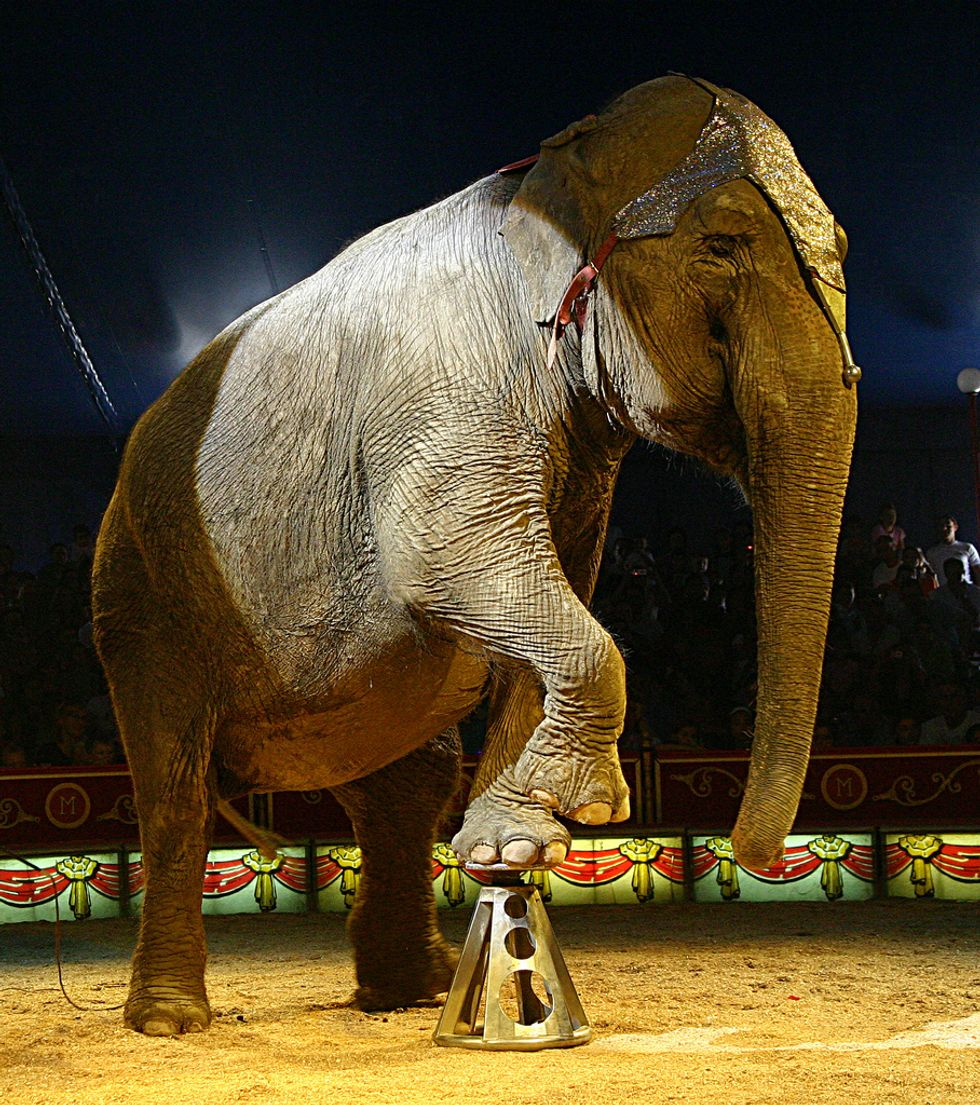 Where Will All the Freed Mexican Circus Animals Go?