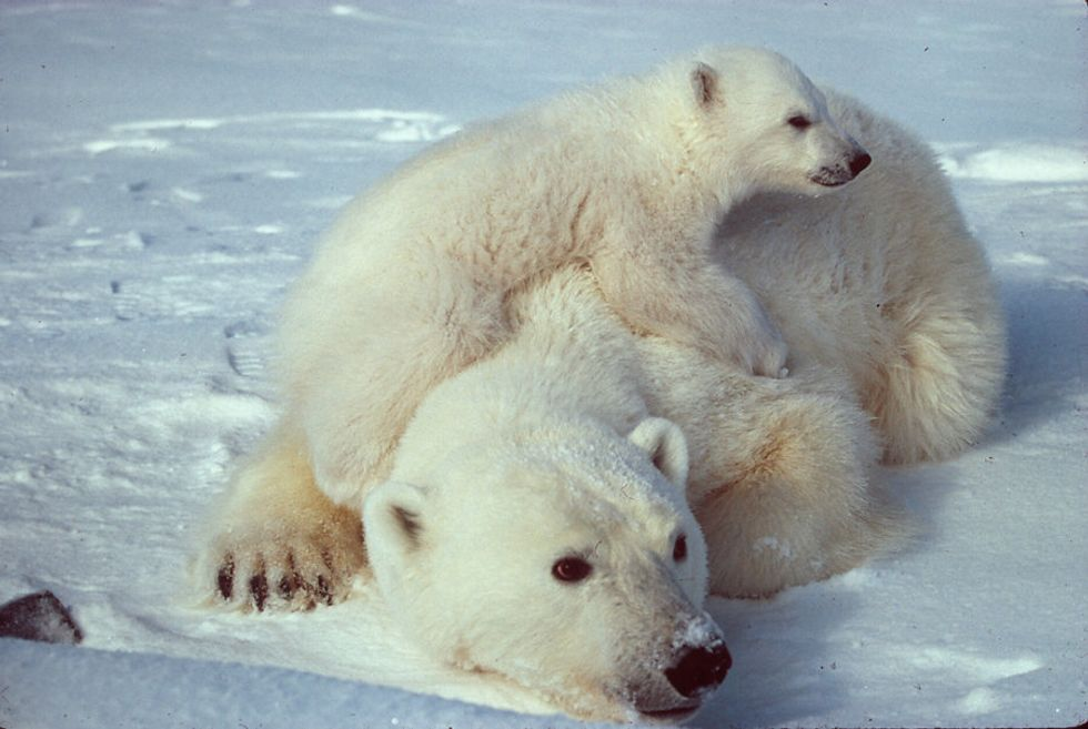 The Battle to Save the Arctic from Drilling is Heating Up