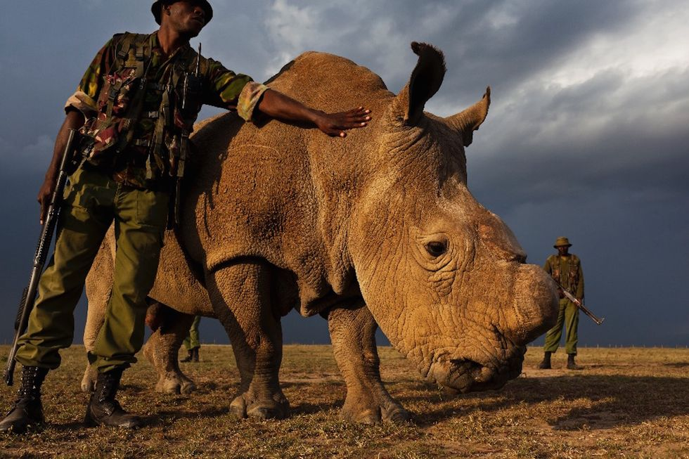 The Last Northern White Male Rhino Has Armed Bodyguards