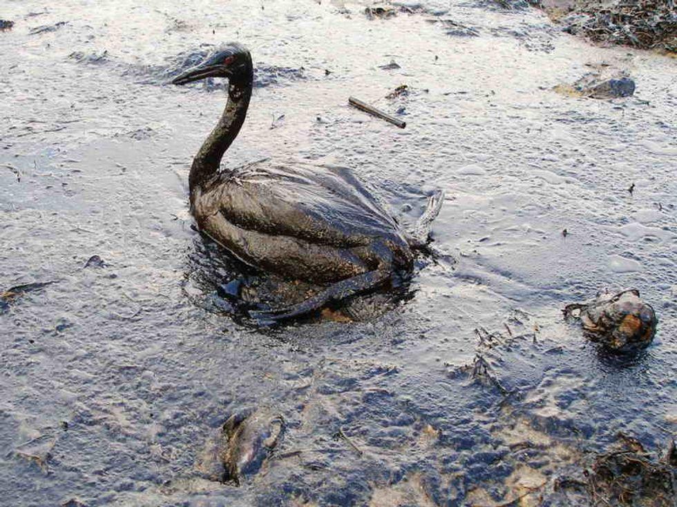 Nature Inspires Net To Fight Back Against Oil Spills