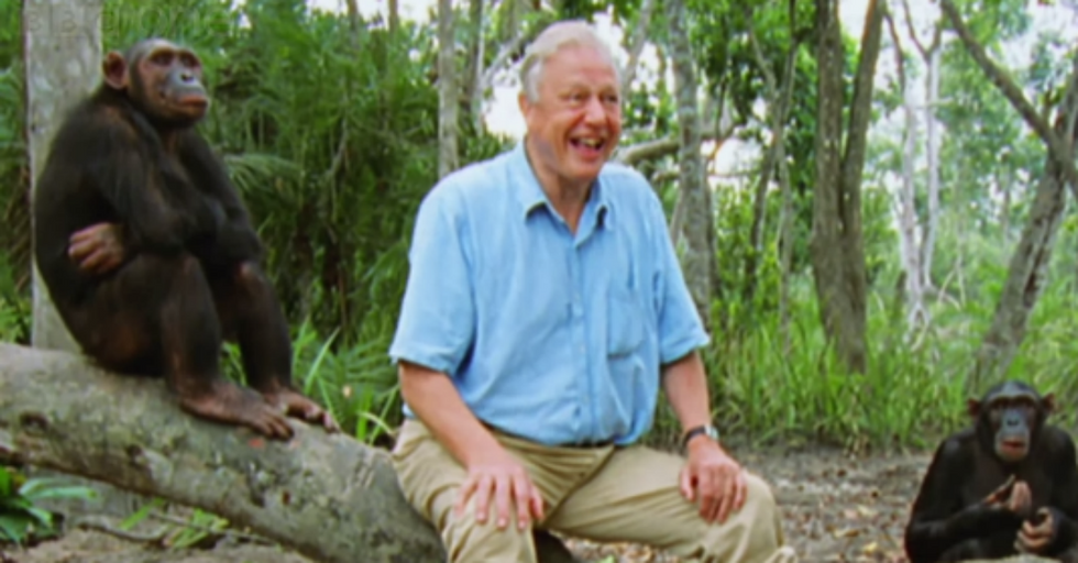 David Attenborough's Remarkable Cover of 'What A Wonderful World""
