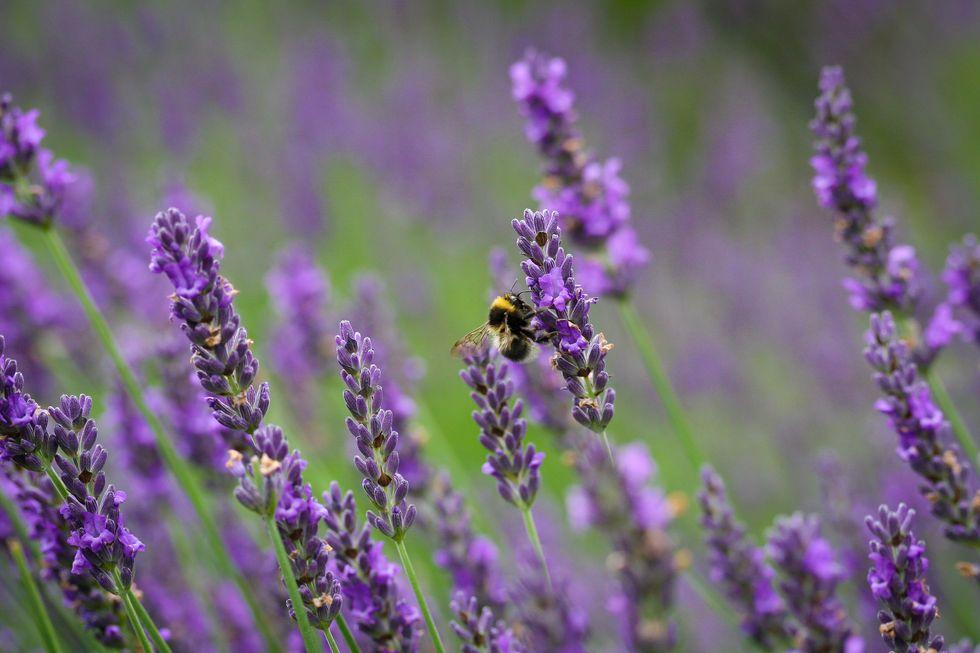 Neighborday Idea #3: Plant a Pollinator Pathway in Your Neighborhood