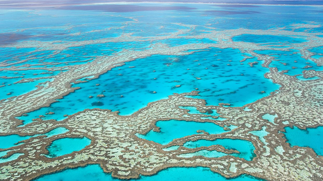 Great Barrier Reef Authority Warns That Climate Action Is Needed Urgently