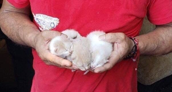 Rescuers Never Gave Up Finding Cat After Saving Her Kittens