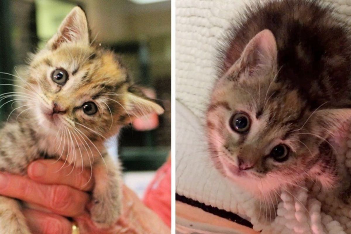 Kitten Found in a Shed, Born Special - She Sees the World at a Slightly Different Angle