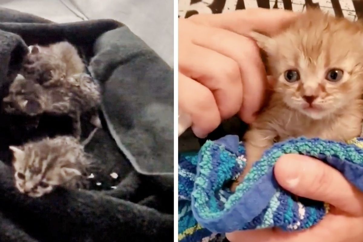 Musicians Hear Kittens Cries While Touring and Discover 6 of Them Hidden Inside Their Bus