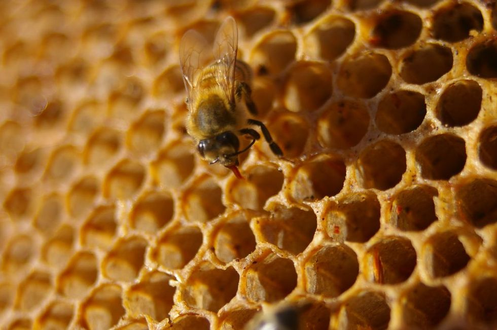 African Farmers Are Building Sustainable Beehive Fences to Protect Their Crops From Wild Elephants