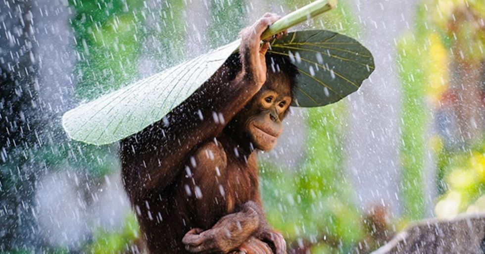 2015 National Geographic Photography Contest Winners Countdown