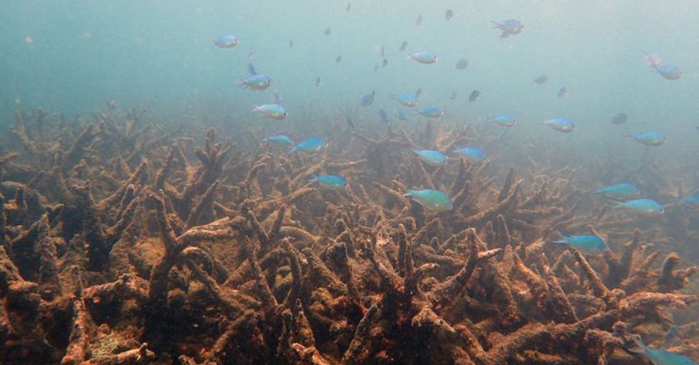 The Great Barrier Reef Just Experienced Its Biggest Die-Off Ever, And You Can Probably Guess Why