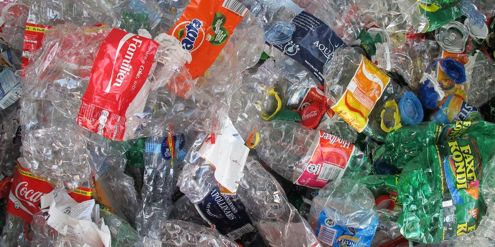 Japanese Researchers Discover Plastic-Eating Bacterium