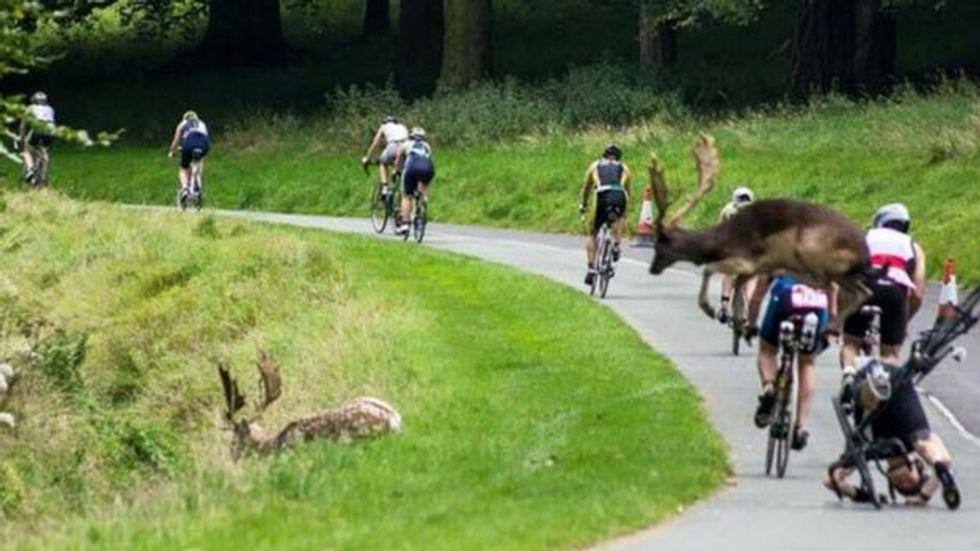 What The Buck? Deer Wreaks Havoc At Triathlon