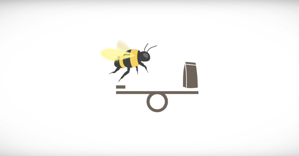 How Bees Can Take The Sting Out Of Pesticides