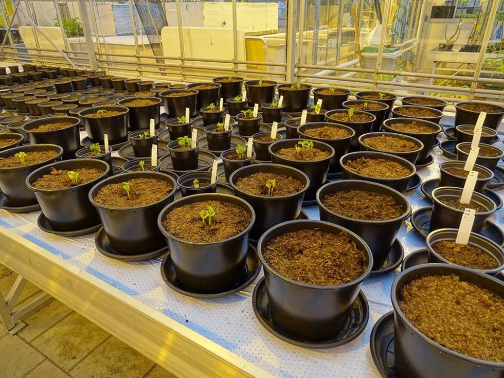 Dutch Scientists Are Committed To Growing Martian Salad Fixings
