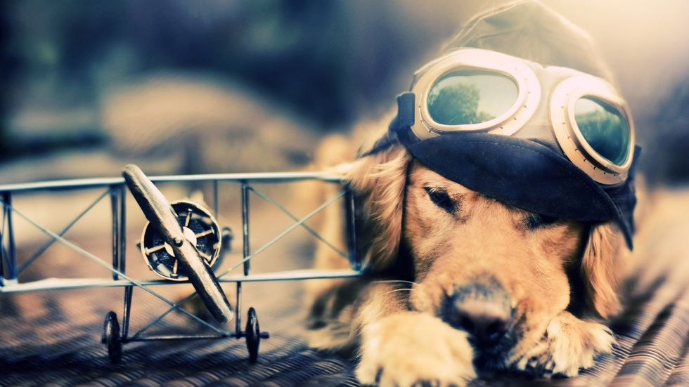Watch This Video Of Dogs Flying Planes