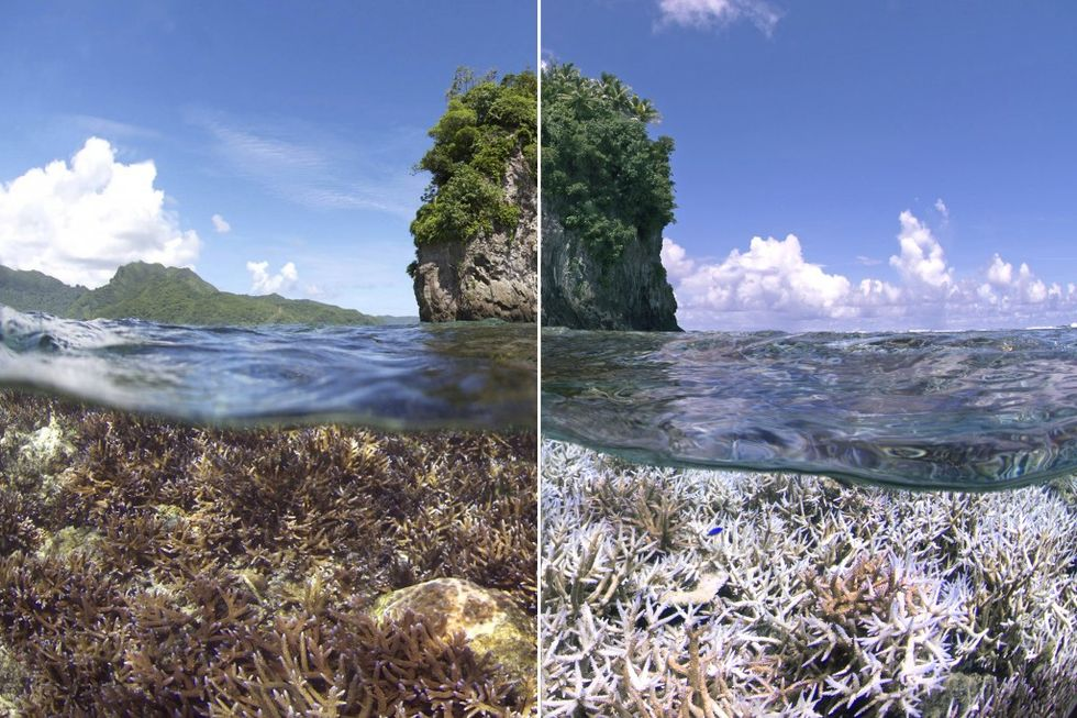 "GOOD Science: What Is ""Coral Bleaching"" And Just How Bad Is It?"