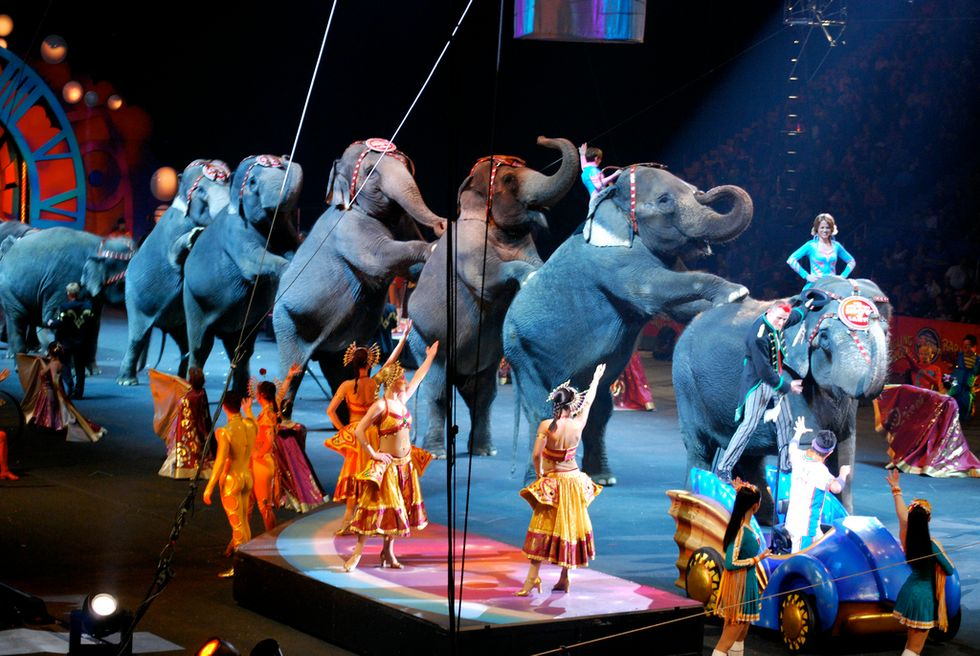 All Remaining Ringling Bros. Circus Elephants Are Retiring to Florida