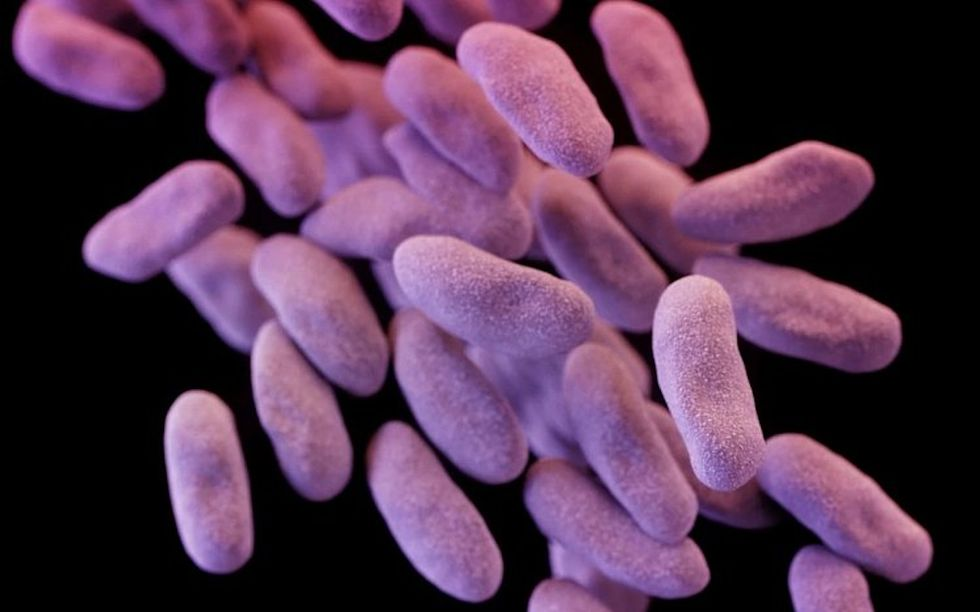 The Most Dreaded, Antibiotic-Resistant Superbug Just Reached The U.S.