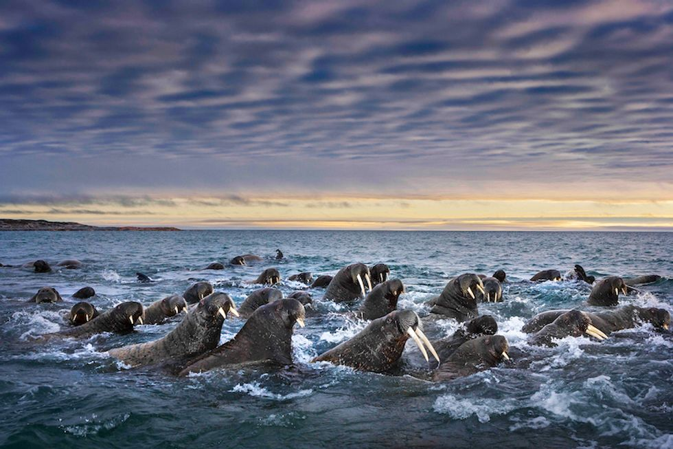 5 Stunning Nature Photos Prove Why We Need To Protect The Earth
