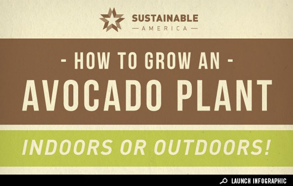 Infographic: From Pit to Plant, How to Grow an Avocado at Home