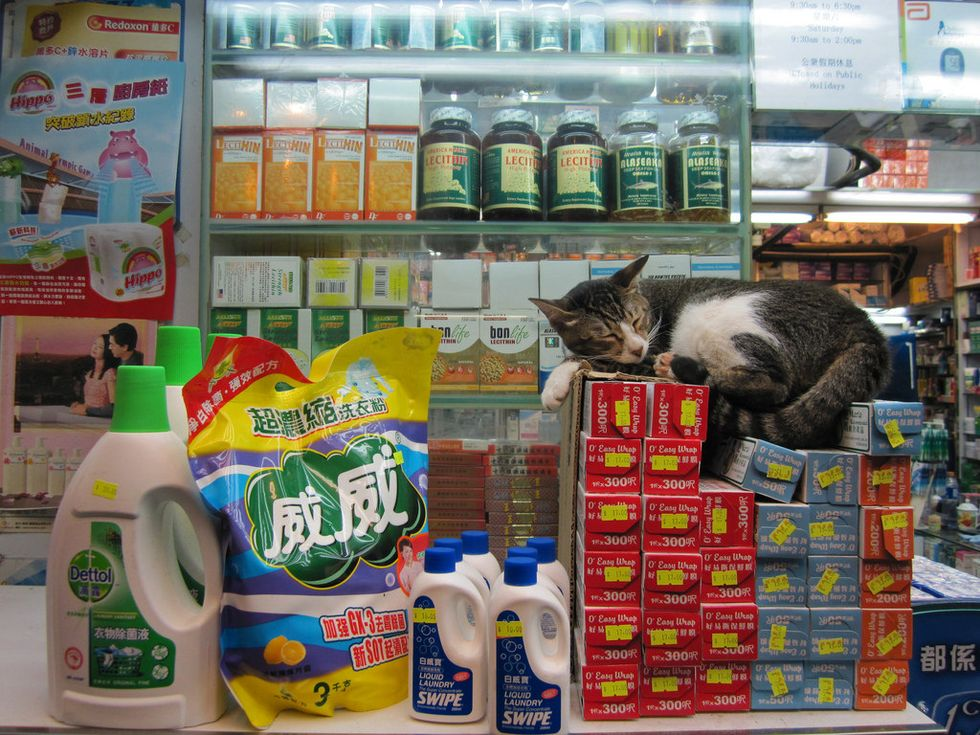 Bodega Cats Exist For One Very Important Reason