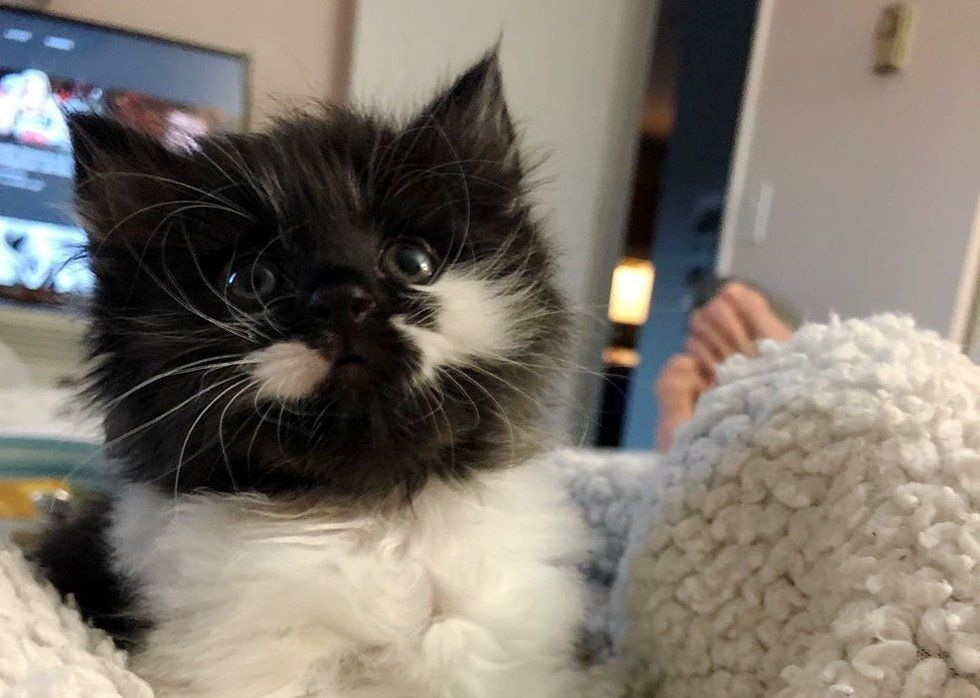 "Rescued Kitten Born in Insulation, Loves Food so Much She ""Swims"" in It"