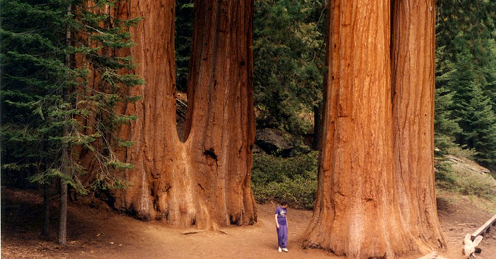 California Promises Swift Action If The Trump Administration Threatens Its Landmarks And Parks