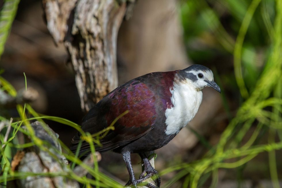 Meet The Island-Hopping Emergency Team That Saved Polynesia's Birds From Extinction