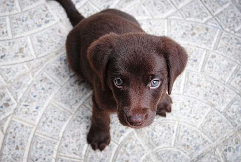 5 Signs That Your Adorable New Puppy Is Not Actually A Puppy And Is Instead An Alien Planning To Destroy The Entire Human Race