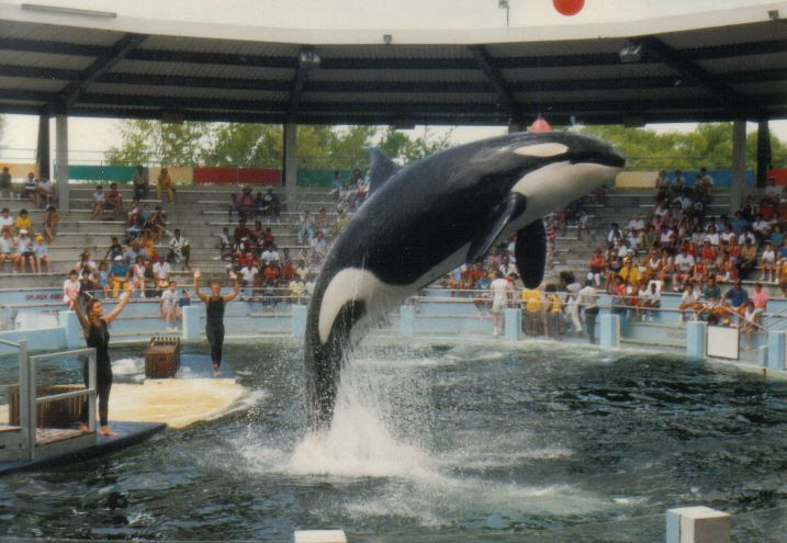 Joe Rogan called out SeaWorld's treatment of dolphins and whales and he makes a great point.