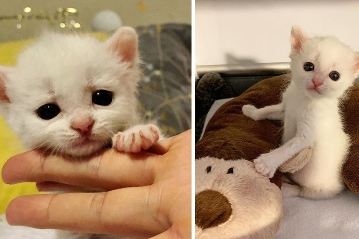 Deaf Kitten Adopted by 2 Deaf Cats - His Life is Forever Changed