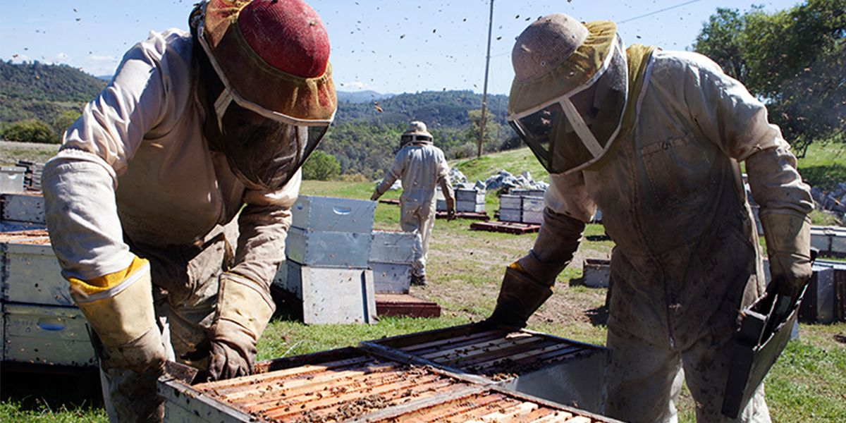 Bees and Beekeepers Feel the Sting of Trump Administration's Anti-Science Efforts
