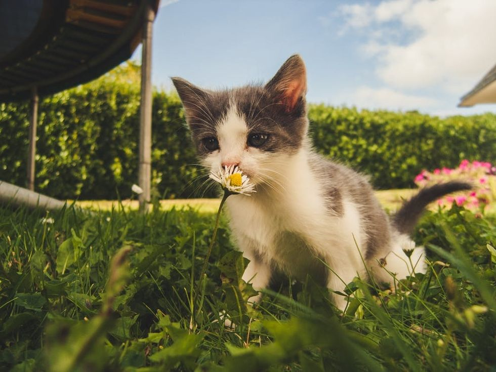 Getting A Kitten Changed My Mood And Helped My Depression